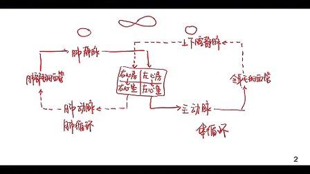 《血液循环途径》微课_2014青岛微课会