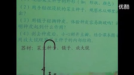 《种子的结构》初中七年级生物优质课视频-桂园中学袁秋卉