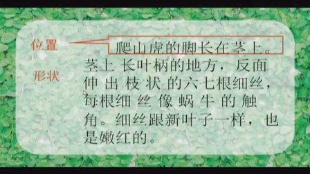 人教版四年级语文上册《爬山虎的脚》教学视频