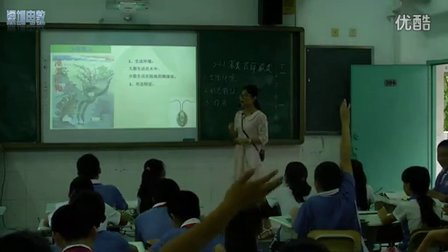 深圳2015优质课《第三单元第一节 藻类、苔藓和蕨类植物》人教版生物七年级,红岭中学:黄美花