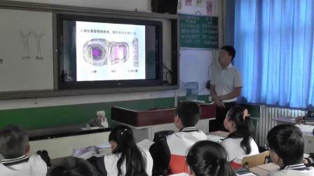 人教版初中生物七下4.2《血流的管道――血管》课堂教学视频实录