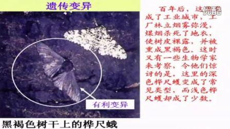 初中生物人教版八年级《生物进化的原因》名师微型课 北京谭荣誉