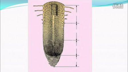 初中生物人教版七年级《植物的结构层次和植物的主要组织类型》名师微型课 北京钱冲