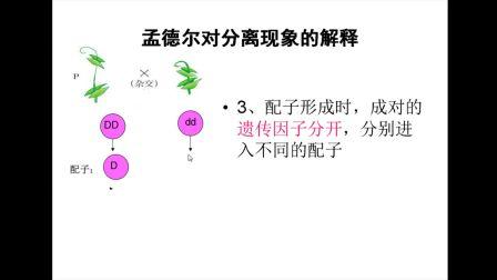 《孟德���Ψ蛛x�F象的解�》高一生物-榆林高新�^完全中�W-李杰-�西省首�梦⒄n大�