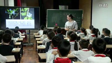 《我要的是葫芦》 教学实录(人教版语文二年级,西丽小学:刘娟)