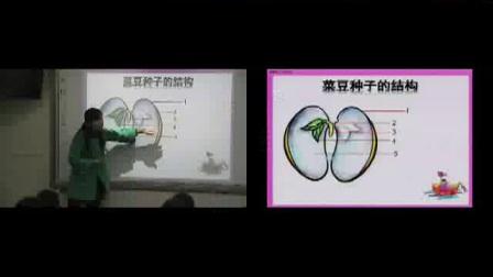 《观察种子结构》初一生物-郑州十六中:王艳允