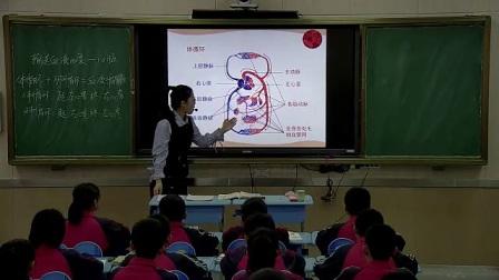 初中生物人教版七下《4.3  输送血液的泵——心脏》山西韩星星