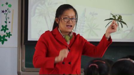 华师大版科学八上4.1《绿色植物的营养器官》课堂实录教学视频-袁琰贤
