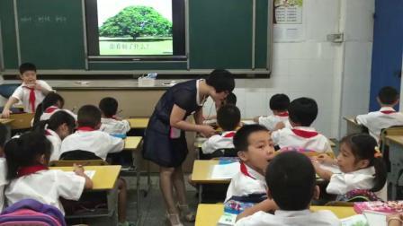 三年级上册科学课堂视频实录-1.1我们看到了什么 教科版-蔡爱霞