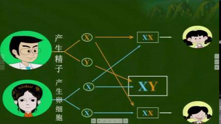 人教2011课标版生物八下-7.2.4《人的性别遗传》课堂教学视频-刘超